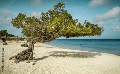 Divi divi tree on Eagle Beach, Aruba Wallpaper Mural