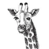 Hand drawn giraffe portrait - 101110684