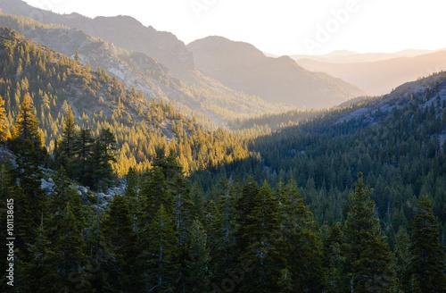 Fototapety, obrazy: Stanislaus National Forest