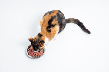 Katze essen aus dem Napf
