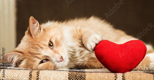 Photo Ginger fluffy cat is playful touching soft toy heart