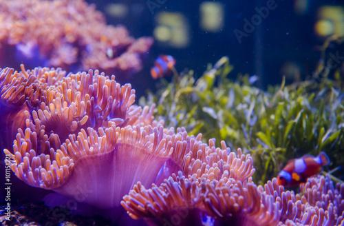 coral in deep blue sea - 101151221