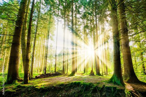 Papiers peints Forets Wald mit Sonne