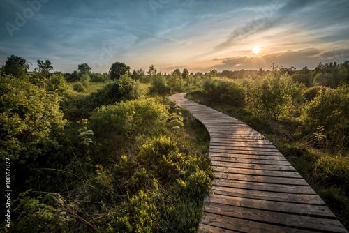 Foto op Canvas Weg in bos Wege und Pfade in der Hohen Venn