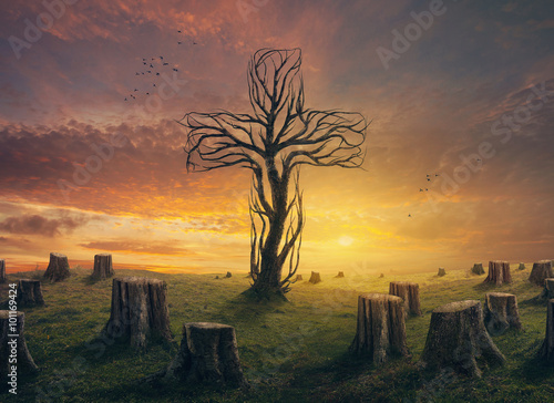 Cross and stumps Plakat