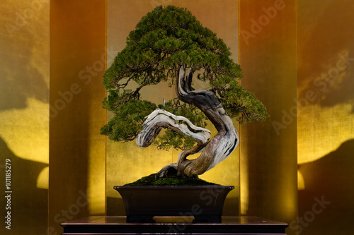 Poster Bonsai Japanese art form using trees, Bonsai, on the gold background