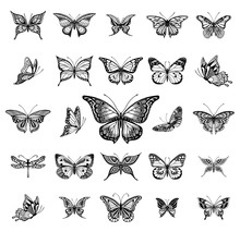 Butterflies Graphic Illustration