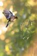 Bird in flight against bright background