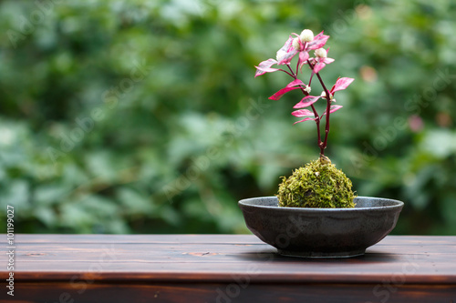 Photo sur Aluminium Bonsai 苔盆栽