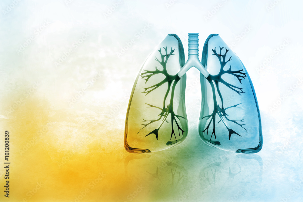 Fototapeta Human lungs
