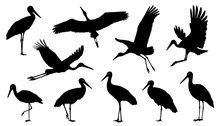 Stork Silhouette