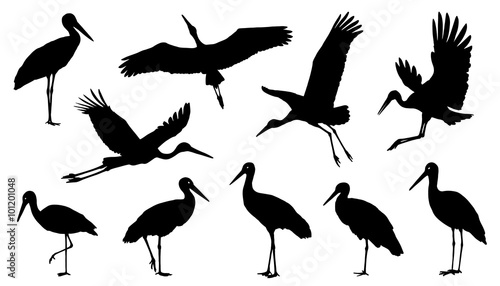 Obraz na płótnie stork silhouette