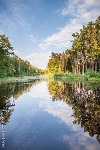 Fototapeta Jezioro w lesie, odbicie drzew w tafli wody obraz