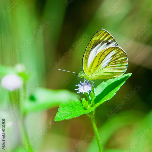 Photo  Butterfly ,Thailand