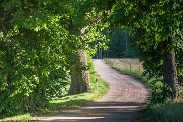 Panel Szklany Wiejski Malownicza droga wijąca się przez las