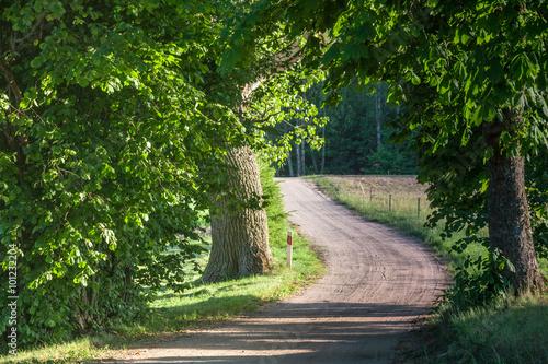 Tuinposter Weg in bos Malownicza droga wijąca się przez las