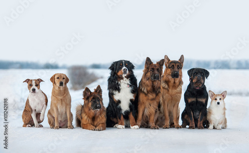 Photo Group of different dogs on obedience training in winter