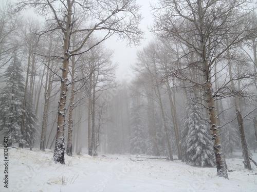 Aluminium Prints Landscapes Snowy Winter Scene in Arizona