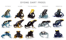 Dyeing Poison Dart Frogs Set, ...