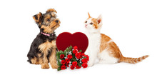 Puppy And Kitten Celebrating Valentines Day