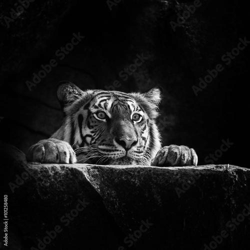 Foto auf Acrylglas Bestsellers tiger