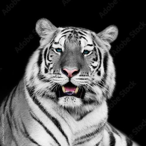 Deurstickers Panter white tiger