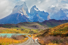 Majestic  Day In Patagonia
