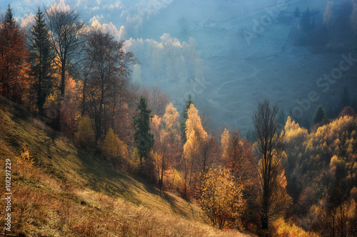 Obraz Foggy and sunny day of a autumn, on wild transylvania hills. Holbav. Romania. Low key, dark background, spot lighting, and rich Old Masters - fototapety do salonu