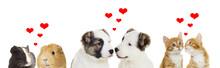 Two Animals, Valentines Day