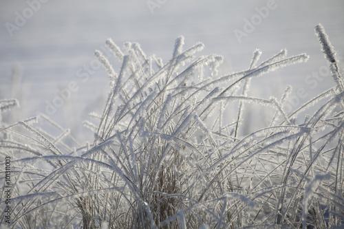 Nature bevroren helmgras