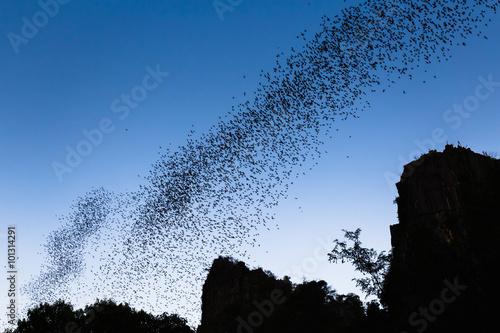 Photo Bats forage