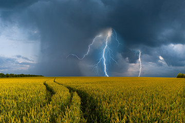 Big wheat field and thunderstorm