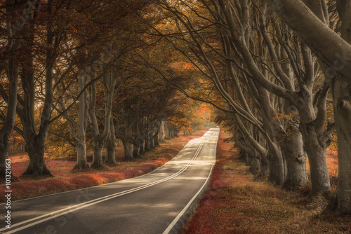 Foto op Plexiglas Diepbruine Beautiful surreal alternate colored forest landscape