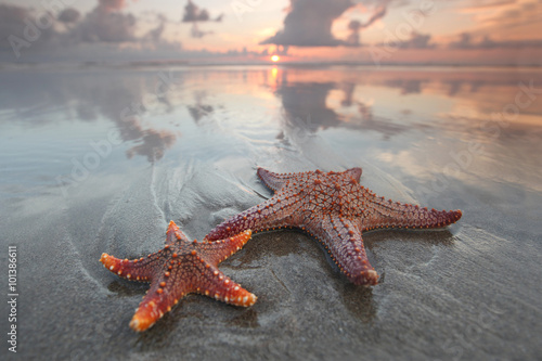 Fotografie, Obraz Two starfish on summer beach