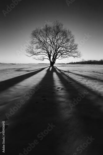 Fotobehang Aubergine 冬の風景