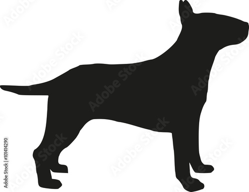 Photo Bull terrier silhouette