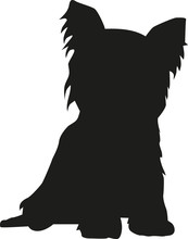 Yorkshire Terrier Sitting Silhouette