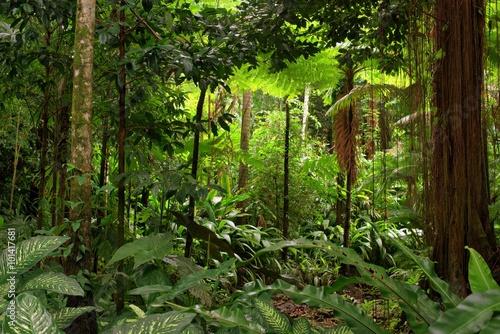 Canvas Prints Oceania rainforest, Queensland, Australia