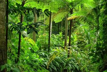 Panel Szklany Las Tropical Garden in Cairns, North Queensland, Australia