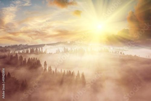 Fotografia  Majestic landscape with forest