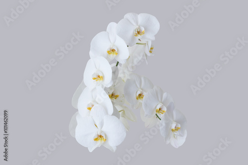 Romantic branch of white orchid - 101462099