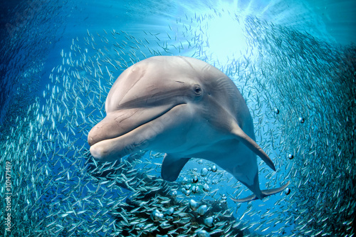 Keuken foto achterwand Dolfijn dolphin underwater on blue ocean background