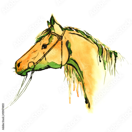 Wall Murals Horses Watercolor painted chestnut horse head with equestrian sport bridle on white. Hand drawing illustration with sorrel stallion.