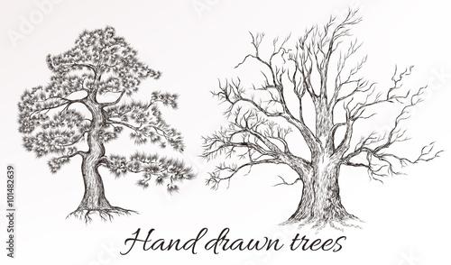 wektorowa-reka-rysujacy-wysocy-szczegolowi-drzewa-dla-projekta