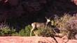 Canyonlands 13 Deer
