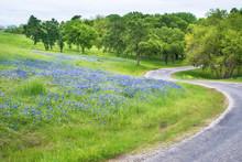 Texas Bluebonnet Field Along C...