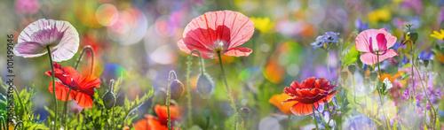 Plakat w ramie Kwiatki na łące
