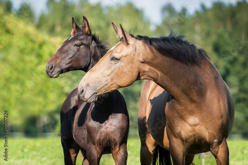 Foto Portrait of beautiful mare with a foal in summer