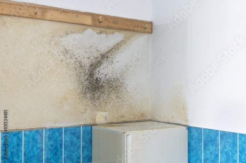 Fotografia, Obraz  A bathroom wall covered with rising damp and moldy mildew