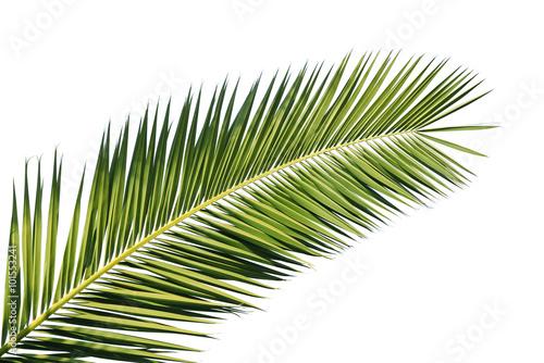 Stickers pour porte Palmier Feuille de palmier